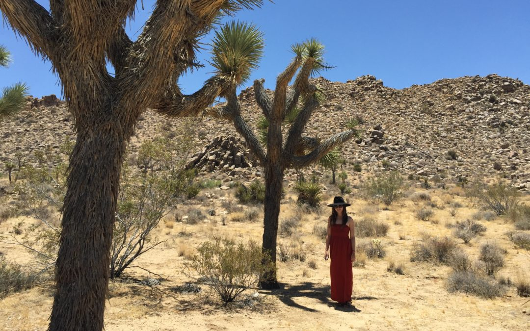 Fun Facts about Joshua Trees
