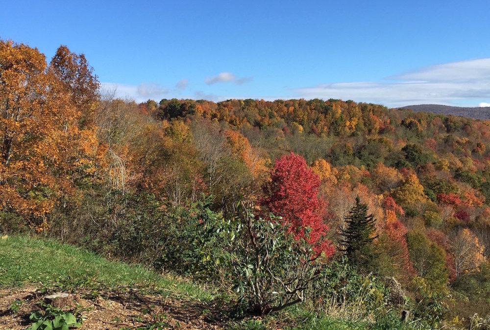 Fall Fun in Tennessee